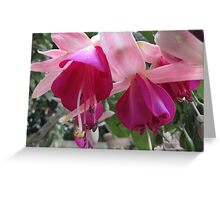 Fuchsia Greeting Card