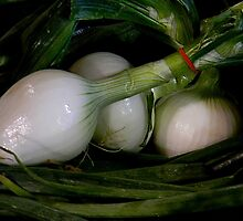 The Onion ! by Elfriede Fulda