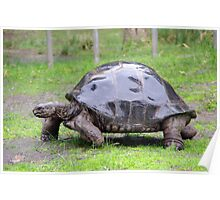 Tuck The Tortoise Poster