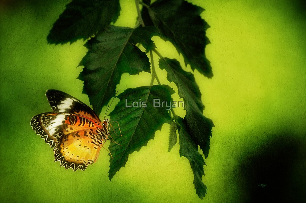 Lacewing Delight by Lois  Bryan