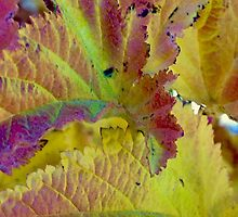 Turning Leaves by Barbara  Brown