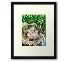 hatched Framed Print