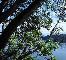 Puget Sound Through the Trees by DelitefulDee