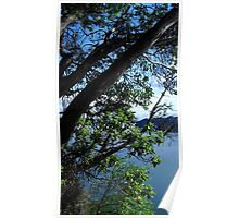 Puget Sound Through the Trees Poster