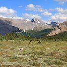 Panoramic meadows by zumi