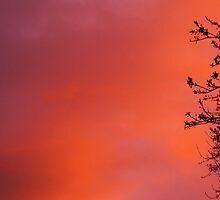 Paint me a Purple Sky by Sable31