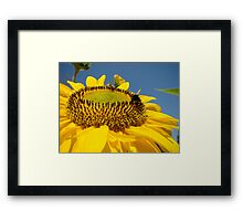 Big Yellow Summer Sunflower art print Bublebee Baslee Framed Print