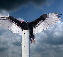 Wings by Michael  Herrfurth