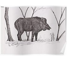 Male boar Poster