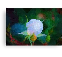 A Rose Painting Canvas Print