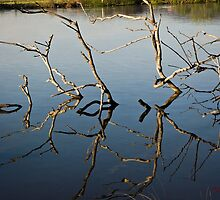 Driftwood at an Early Morning Spring at Lake Burley Griffin in Canberra/ACT/Australia (1) by Wolf Sverak