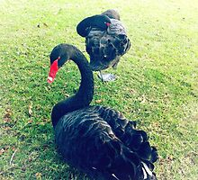 Black Swans by AlyZen