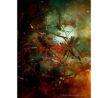 Coral Tree in Space Photographic Print