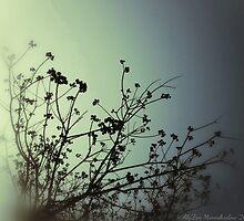 FOGGY by AlyZen