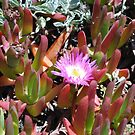 Monterey Succulent 4 by Polly Greathouse