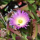 Monterey Succulent 5 by Polly Greathouse