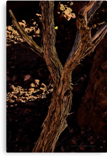 Screaming Tree Vomits Inner Poison Outwards In A Head Wind © Vicki Ferrari Photography by Vicki Ferrari