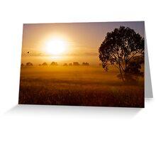 Golden Sunrise - Verrierdale - Queensland Greeting Card