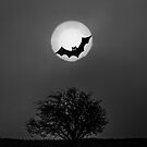 Bat In The Moon by Sandra Cockayne