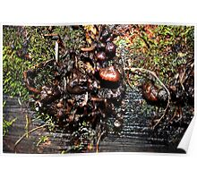 Slimey Fungi Poster