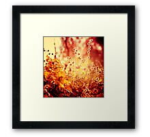 Sunset in my garden. Framed Print