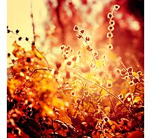 Sunset in my garden. Photographic Print