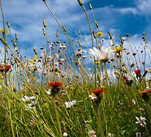 Brushed wild meadow flowers by SnippsWhispers