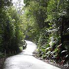 Forest walk by Mark B Williams