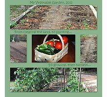 My Vegetable Garden, 2011 Photographic Print