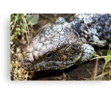 Bobtail Lizard Canvas Print