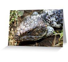 Bobtail Lizard Greeting Card