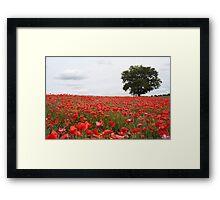 Poppies! Framed Print