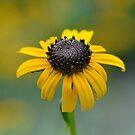Flower by vasu