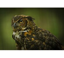 Great Horned Owl Profile Photographic Print