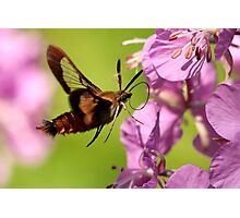 Fairy-Winged Flier Photographic Print