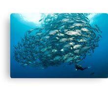Fish Watch Canvas Print