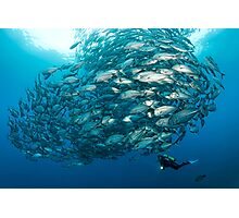 Fish Watch Photographic Print