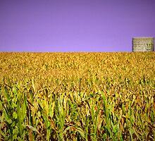 cornfield by budrfli
