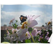 Butterfly chair  Poster