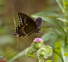 Butterfly  by Moutaz