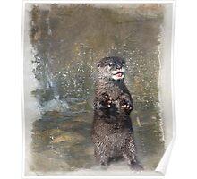 Otter with fingerless gloves Poster