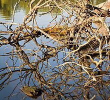 Driftwood at an Early Morning Spring at Lake Burley Griffin in Canberra/ACT/Australia (3) by Wolf Sverak