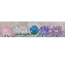 Five Lotus Flowers Photographic Print