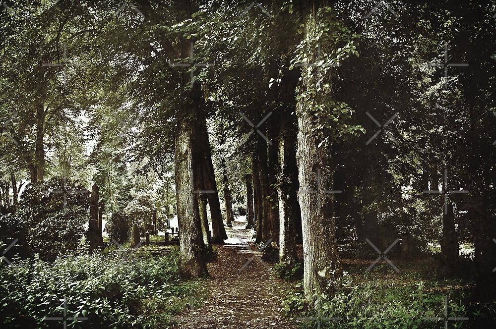 Long-Forgotten Whispers by Denise Abé