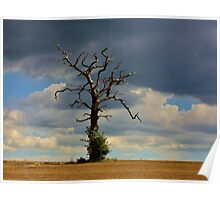 Tree #10 Poster