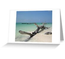 Driftwood Dreaming Greeting Card