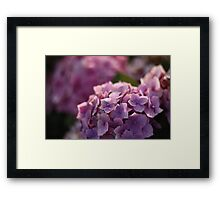 Experimenting With Macro Photography Framed Print