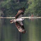 Osprey at Lake Tanwax by Dave Davis