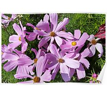 purple flowers in the sun Poster