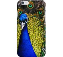 Peacock Showing Plumage - Full Colour digital image from Jenny Meehan   iPhone Case/Skin